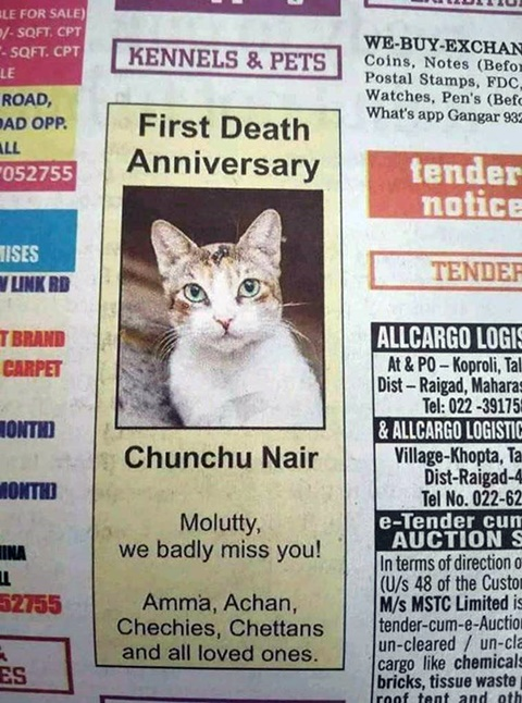 cat remembrance