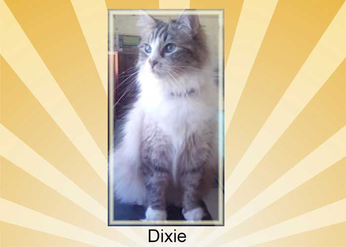 Dixie a cat earmarked for euthanasia but saved
