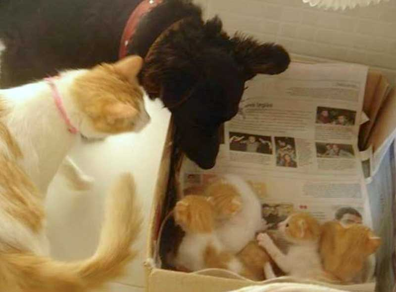 Tender dog leaves some of his food to feed stray pregnant cat and they become a family
