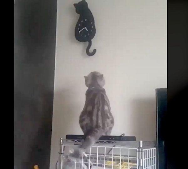 Feline synchronicity