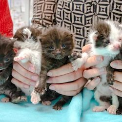 Five kittens survive 500 mile journey and a construction site