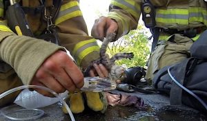 GoPro- Fireman Saves Kitten video will move you