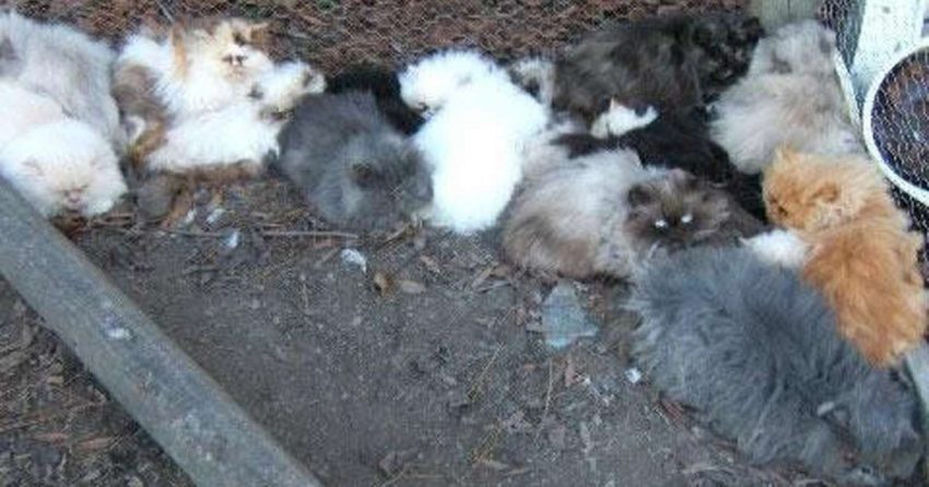 Kitten factory