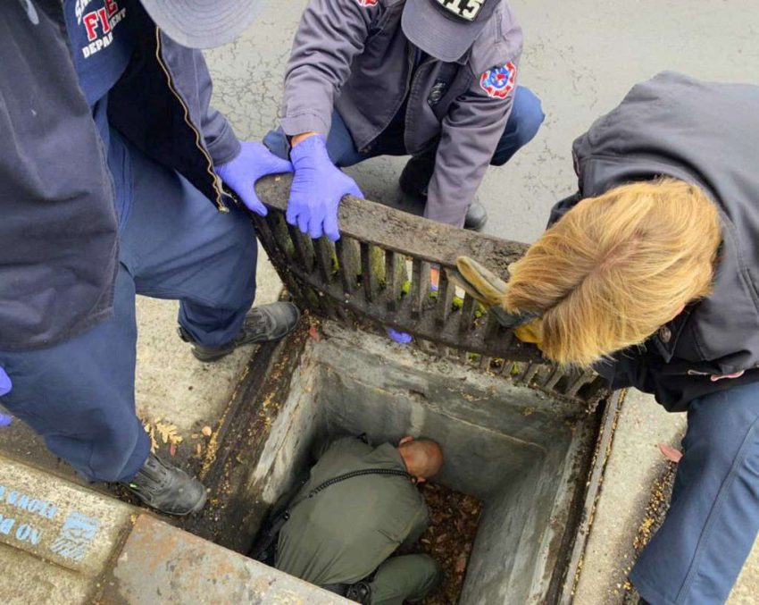 Kitten rescued from storm drain