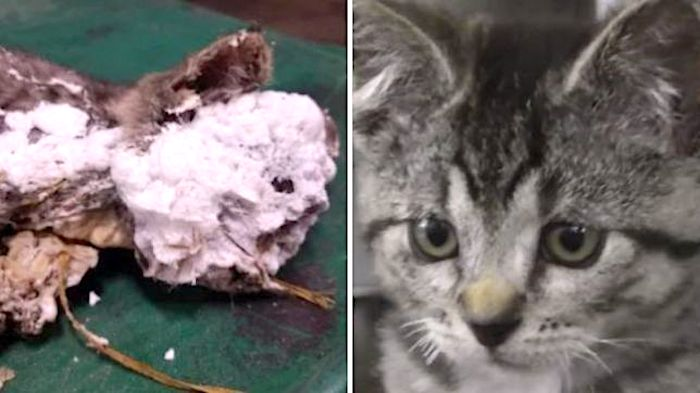 Kitten sprayed with contruction foam and chucked in waste bin