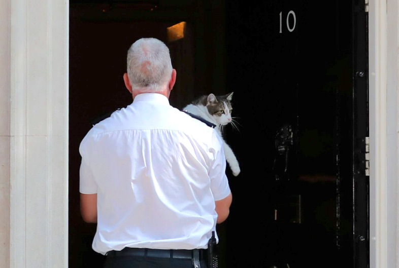 Larry being removed from outside No 10 prior to Theresa May delivering her farewell speech on resigning.