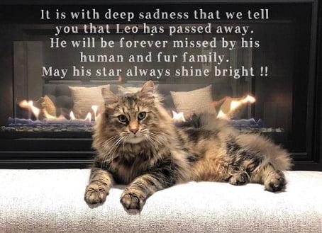 Pet Sematary cat dies