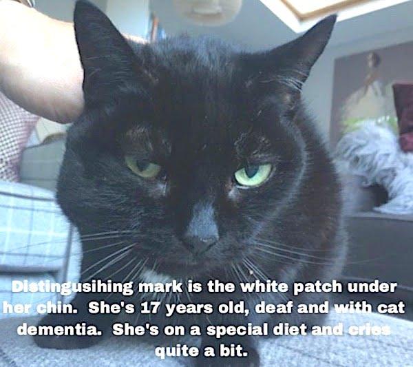 Lost cat Tilly