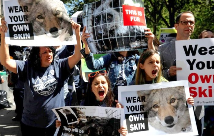 NYC fur ban. Outside City Hall where pro fur protestors vie with anti-fur protestors