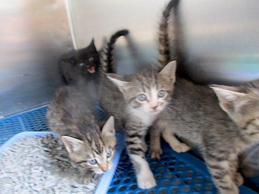 Overloaded animal shelter