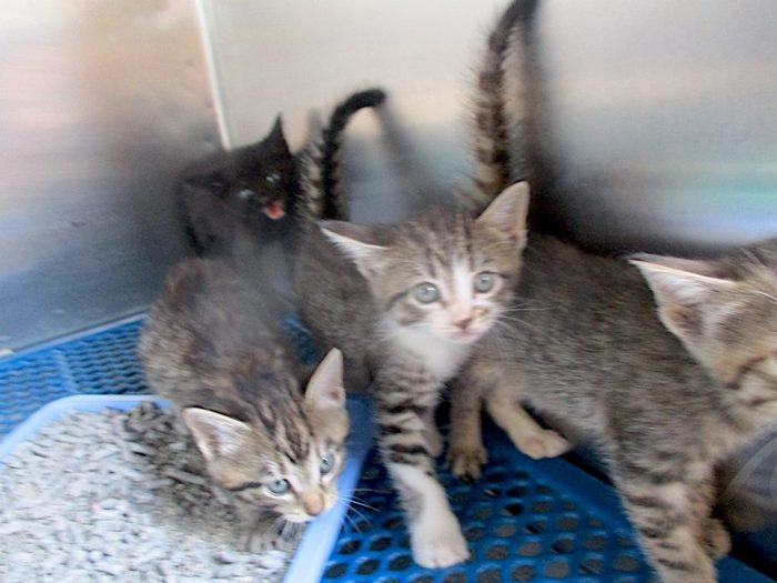 Overloaded shelter cats
