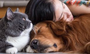 Owning cats and dogs is in the DNA