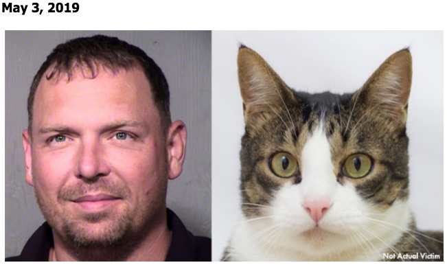 Man abuses cat