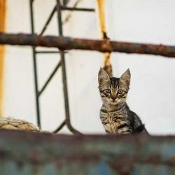 Shipyard feral cat