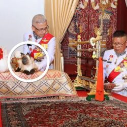 Stuffed Siamese cat used at Thai kings housewarming party