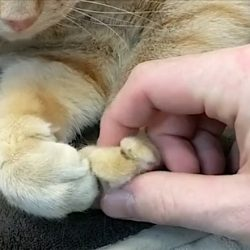 Touching a cat's paws