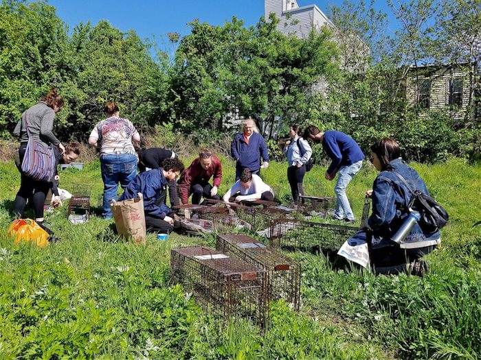 Trapping feral cats in South Philadelphia