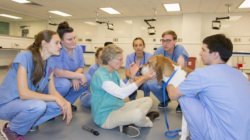 Veterinary college Cornell