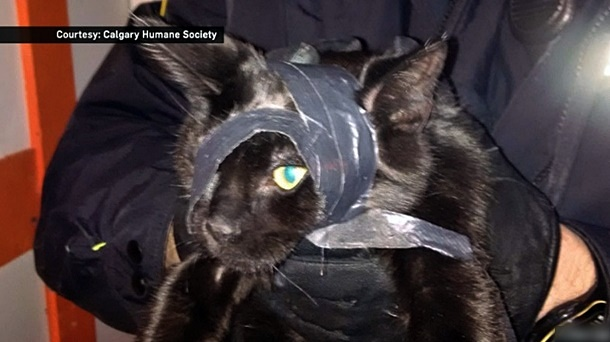 duct taped cat