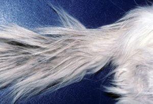 Feline stud tail