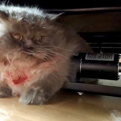 Cat stuck under recliner and hurt