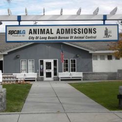Long Beach Animal Care Services