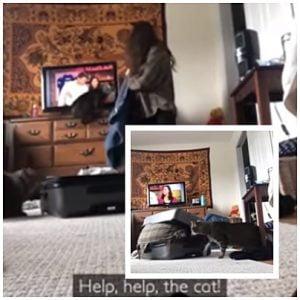 cat attacks owner