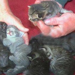 6 rescued kittens