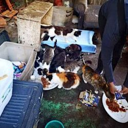 90-year-old female pensioner has her 40 cats and kittens taken from her