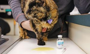 Acid suppressant for cats