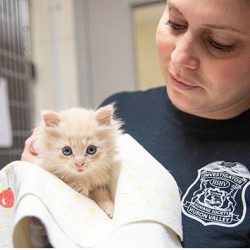 Beasley a kitten was allegedly abused by a pre-teen child