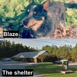 Blaze and the shelter where he was accidentally killed