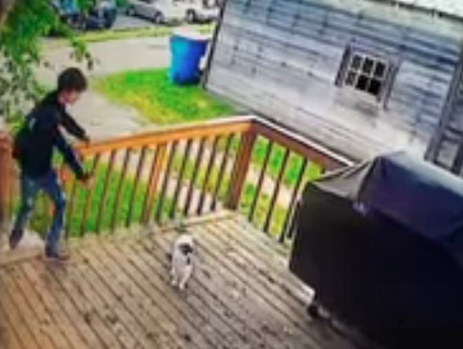 Boy steals (abducts) Jack, a family's cat. Screenshot