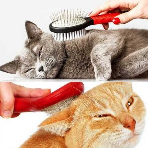 Brushing a cat