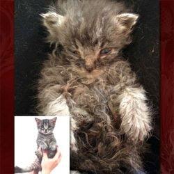 Cat hoarder's kitten