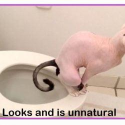 Cat on human toilet