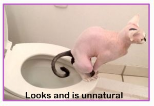 Cat on human toilet