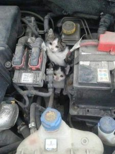 Cats rescued from car engine by Destinys Road Animal Rescue