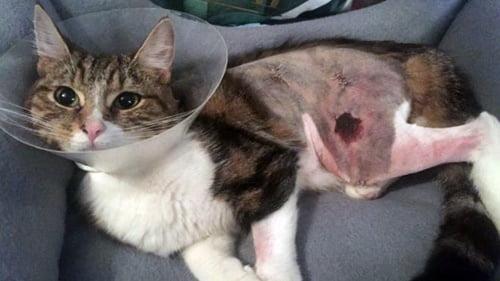 Brighton cat injured