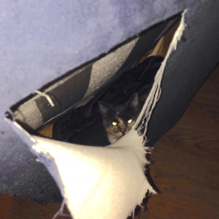 Cat inside sofa