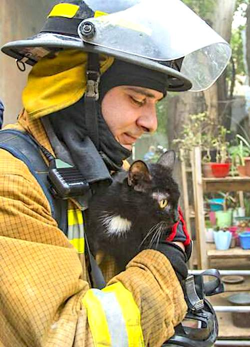 Russian firefighter and rescued cat