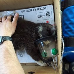 cat revived with oxygen