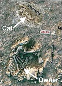 First domestic cat in Cyprus grave