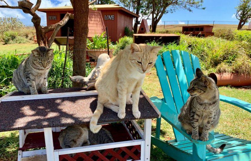 Lanai Cat Sanctuary. Photo: Christopher Muther Globe Staff,