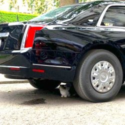 Larry the Cat underneath Pres Trump's car