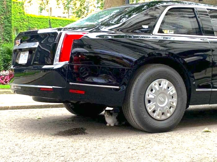 Larry the Cat underneath the 'Beast'.