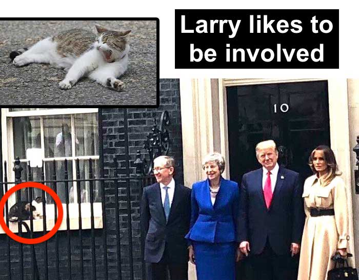 Larry the Cat getting involved.