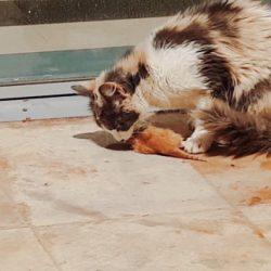 Mother cat eating kitten