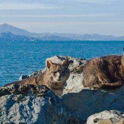 San Francisco feral cats. Photo in public domain/fair use.