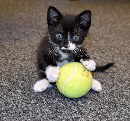Tampa kitten